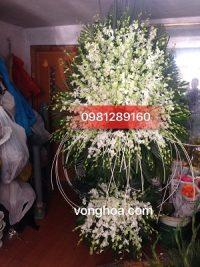 lẵng hoa lan trắng